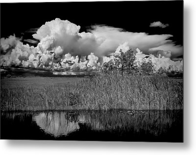 shark river slough BW Metal Print by Rudy Umans