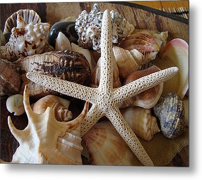 She Sells Seashells Metal Print by Tamara Bettencourt