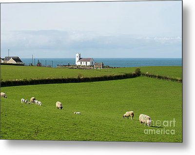 Metal Print featuring the photograph Sheep Grazing On Irish Coastline by Juli Scalzi