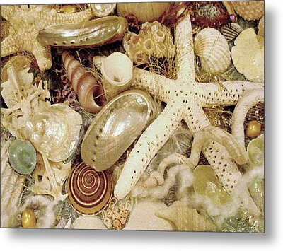 Metal Print featuring the photograph Shell Collection by Rosalie Scanlon