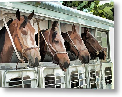 Show Horses On The Move  Metal Print by Wilma Birdwell