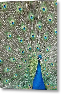 Metal Print featuring the photograph Showing Off by Margaret Bobb