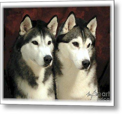 Siberian Huskies Related Metal Print by Maxine Bochnia