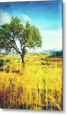Metal Print featuring the photograph Sicilian Landscape With Tree by Silvia Ganora