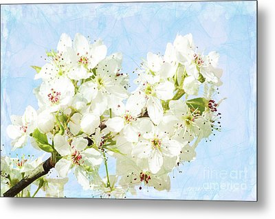 Signs Of Spring Metal Print by Inspirational Photo Creations Audrey Woods