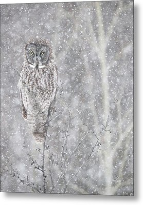Metal Print featuring the photograph Silent Snowfall Portrait by Everet Regal