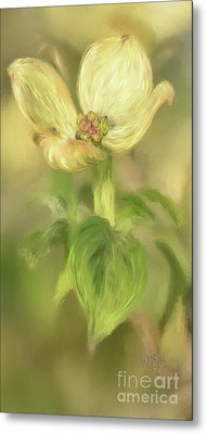 Single Dogwood Blossom In Evening Light Metal Print by Lois Bryan