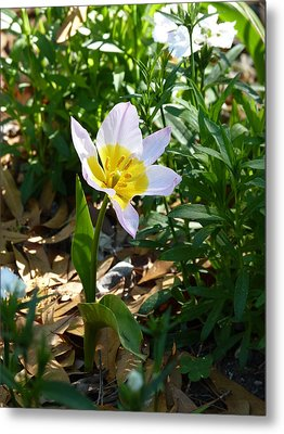Metal Print featuring the photograph Single Flower - Simplify Series by Carla Parris