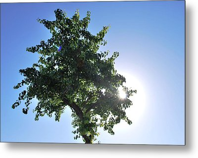 Single Tree - Sun And Blue Sky Metal Print