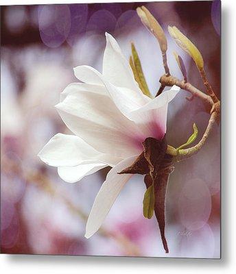Single White Magnolia Metal Print by Jordan Blackstone