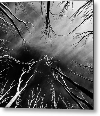 Skeleton Trees 2 Metal Print by Mihai Florea