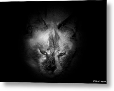 Metal Print featuring the photograph Sleepy Head by Betty Northcutt