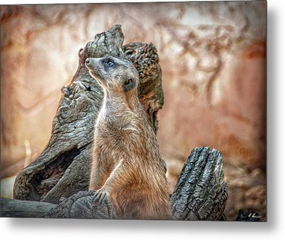 Metal Print featuring the photograph Slender-tailed Meerkat by Hanny Heim