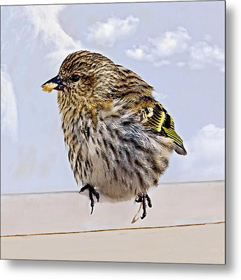 Small Bird Eating Seed Metal Print