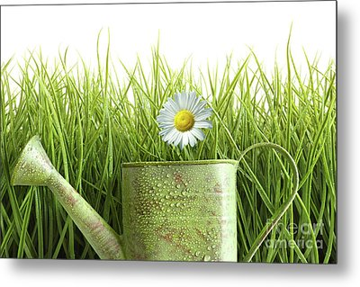 Small Watering Can With Tall Grass Against White Metal Print by Sandra Cunningham