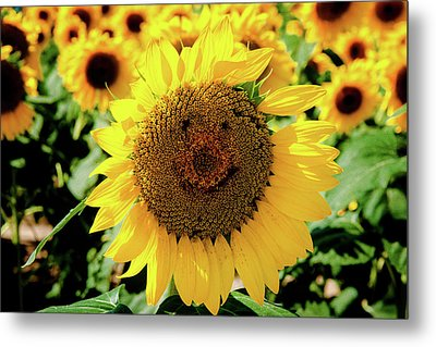 Smile Metal Print by Greg Fortier