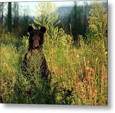 Metal Print featuring the photograph Smoky Mountain Staredown by Doug McPherson