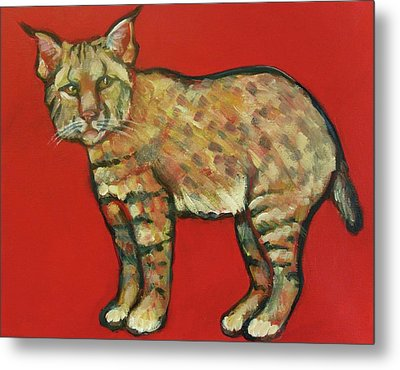 Smug Bobcat Metal Print by Carol Suzanne Niebuhr