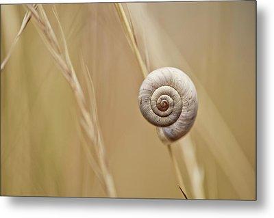 Snail On Autum Grass Blade Metal Print by Nailia Schwarz