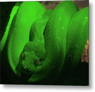 Snake Metal Print by Jeremy Martinson