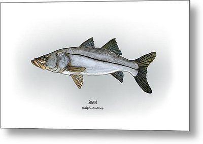 Snook Metal Print by Ralph Martens