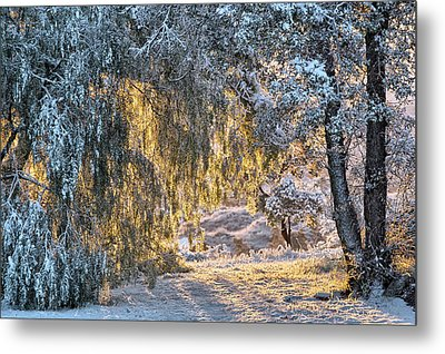Snow At Sunrise 2 Metal Print