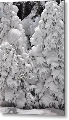 Metal Print featuring the photograph Snow Coat by Alex Grichenko