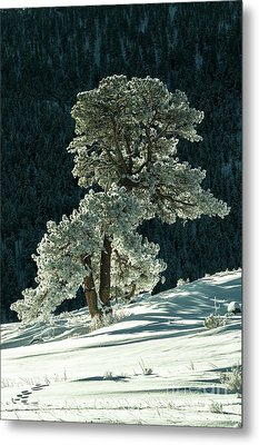 Snow Covered Tree - 9182 Metal Print