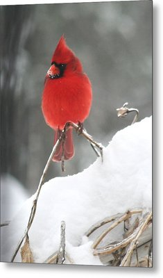 Metal Print featuring the photograph Snow Day by Diane Merkle