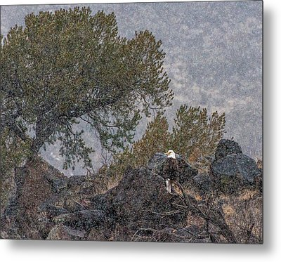 Metal Print featuring the photograph Snow Flurry Bald Eagle by Britt Runyon