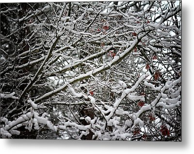 Snow Laden Trees Metal Print