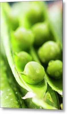 Snow Peas Or Green Peas Seeds Metal Print by Vishwanath Bhat