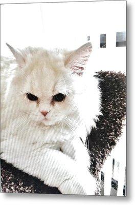 Snowball Is 92 Year Old Widows Cat Metal Print by Marsha Heiken