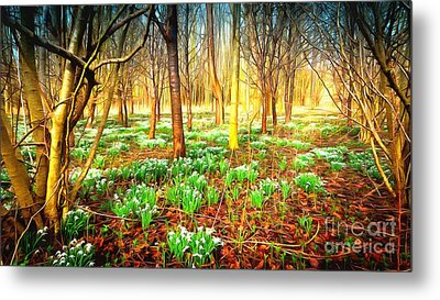 Snowdrops In The Woods Metal Print by Mick Flynn