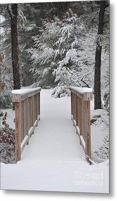 Snowy Path Metal Print by Catherine Reusch Daley