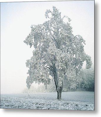 Snowy Winter Landscape Metal Print
