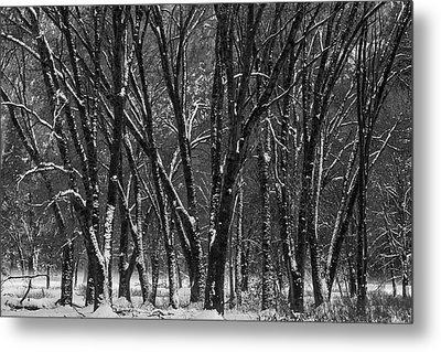 Snowy Yosemite Woods In Black And White Metal Print by Garry Gay