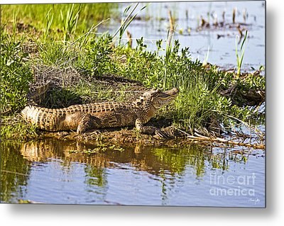 Soaking In The Sun Metal Print by Scott Pellegrin