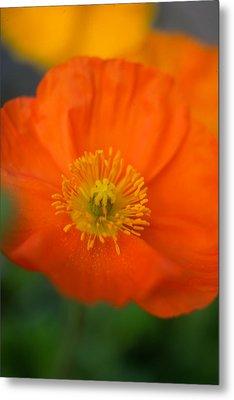 Softly Poppies Metal Print by Kathy Yates