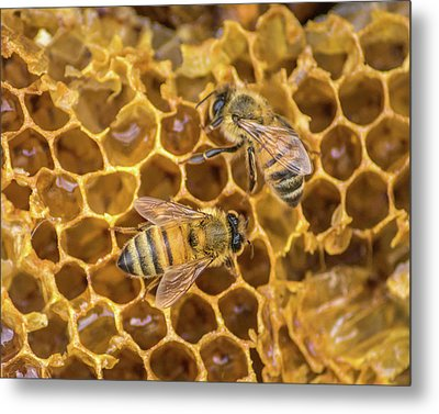Metal Print featuring the photograph Some Of Your Beeswax by Bill Pevlor