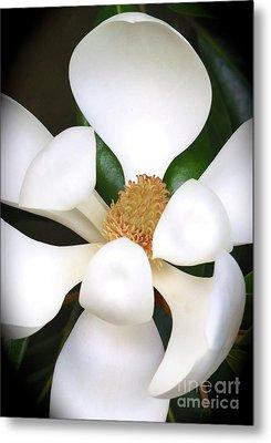 Southern Magnolia Cameo Metal Print