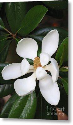 Southern Magnolia Grandiflora Metal Print