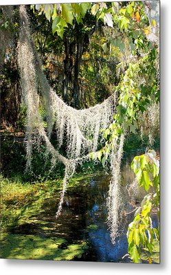 Spanish Moss Over The Swamp Metal Print by Carol Groenen