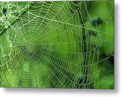 Spider Dew Metal Print by Paul Marto