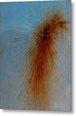 Spidery Metal Print by Elizabeth McPhee