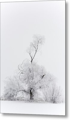 Metal Print featuring the photograph Spirit Tree by Dustin LeFevre