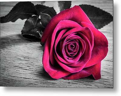 Splash Of Red Rose Metal Print
