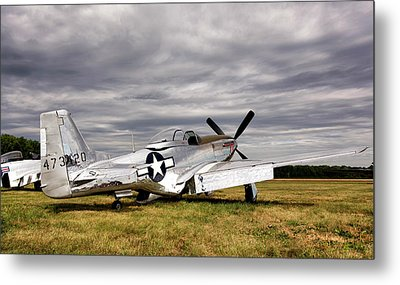 Splendor In The Grass Metal Print by Peter Chilelli