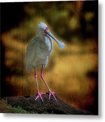 Metal Print featuring the photograph Spoonbill by Lewis Mann