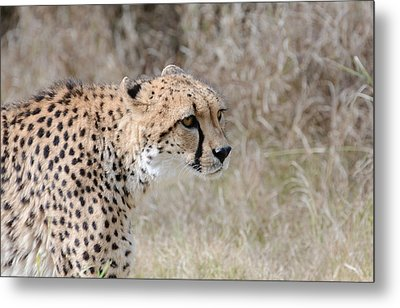 Metal Print featuring the photograph Spotted Beauty 2 by Fraida Gutovich